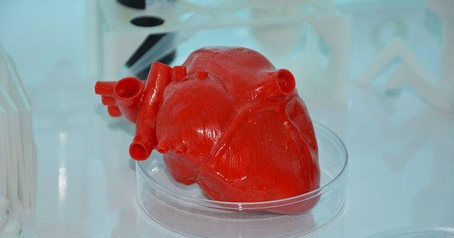 Türk bilim insanları 3D biyo-yazıcı ile 'kalp' üretecek