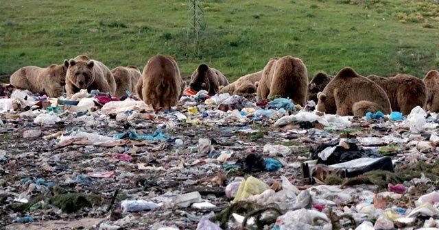 Türkiye'de sadece Kars'ta görülüyor! İlçeye inip yiyecek aradılar