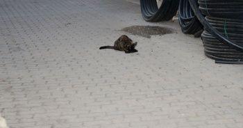 Anne sokak kedisinin yürek sızlatan görüntüsü