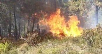 Sultanbeyli'de korkutan orman yangını
