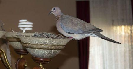Daha önce hiç böyle bir kuş yuvası görmediniz