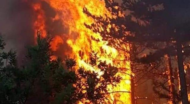 """""""Türkiye genelinde dün orman ve tarım alanlarında 27 yangın çıktı"""""""