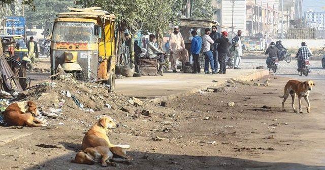 Bir günde 59 köpek saldırısı