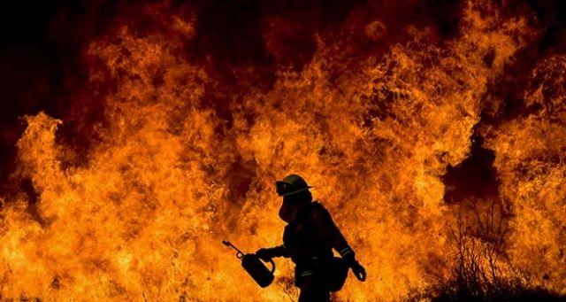 Kuşadası'nda zeytin ve makilik alanda yangın çıktı