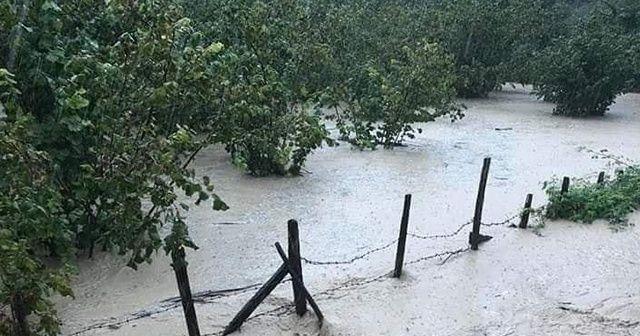 Ordu'da fındık bahçelerini su bastı