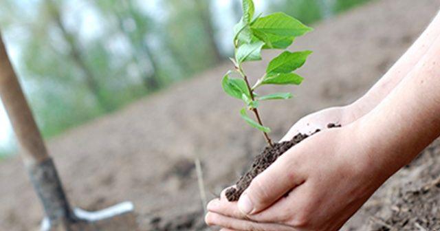 Tarım ve Orman Bakanlığının 'Fidan Dikme' etkinliğine bakanlardan destek
