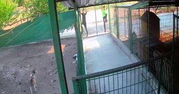 Barınağa giren hırsızlar köpekleri çalıp kaçtı