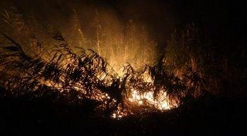 Edremit'te sazlık yangını, 5 hektarlık alan zarar gördü