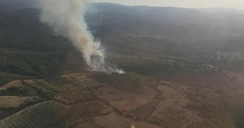 İzmir'de bir orman yangını daha