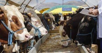 Kurban Bayramı öncesi 'zoonotik hastalık' uyarısı