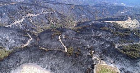 İzmir'deki yangından geriye kapkara bir tablo kaldı