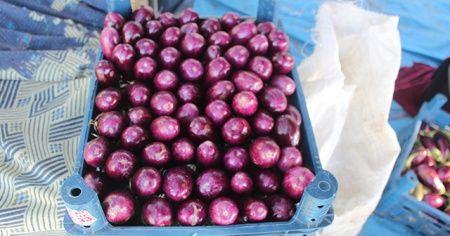 Patlıcan tarlada 25 kuruş, pazarda 1,5 lira