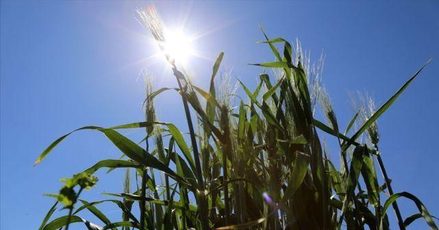 Çiftçilere 1 milyon liralık tohum desteği