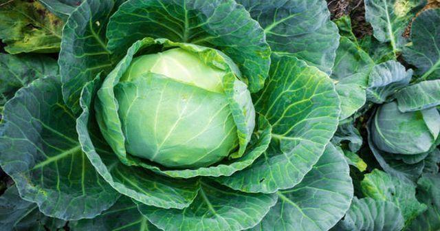 Kara lahana faydaları ve zararları nelerdir, kara lahana tüketenler