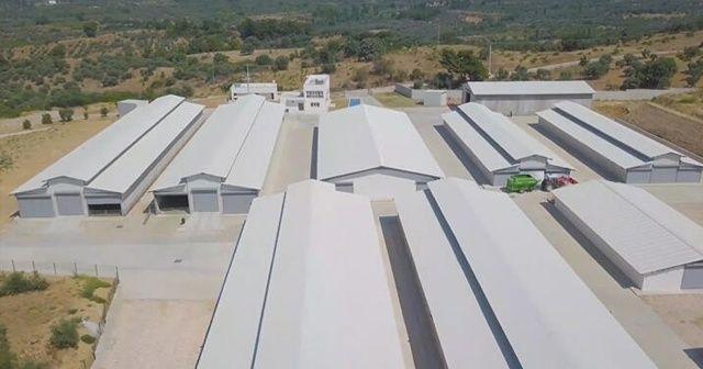 Türkiye'nin en modern keçi çiftliği kuruldu