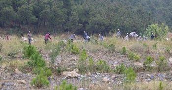 20 bin fıstık ve akasya maden sahasına dikildi