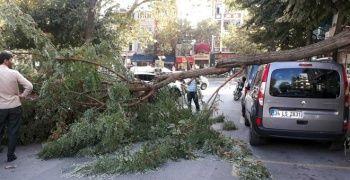 Şiddetli rüzgardan ağaç otomobilin üstüne devrildi