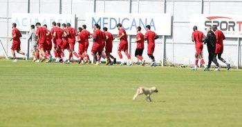 Sivasspor idmanına davetsiz misafir