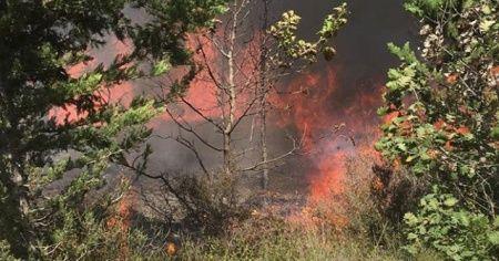Silivri'de 3,5 hektarlık ormanlık alan kül oldu