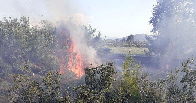 Antalya'da makilik alanda yangın!
