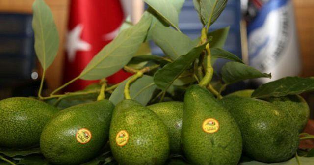 Avokado nasıl yenir? Avokado nasıl kesilir? Avokado faydaları ve Avokado nasıl tüketilir?