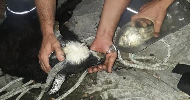 Kayalıkta mahsur kalan 'Karakızı' AFAD ve jandarma kurtardı