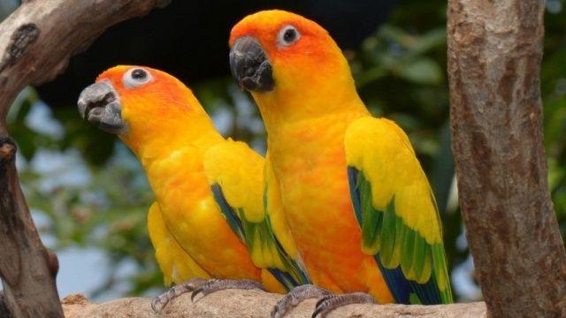 Papağan Türleri İsimleri Özellileri Ve Ömürleri