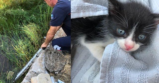 Su kanalına düşen yavru kediyi itfaiye kurtardı