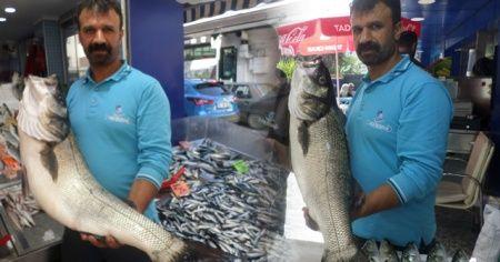 Balıkçıların ağlarına 10 kiloluk levrek takıldı