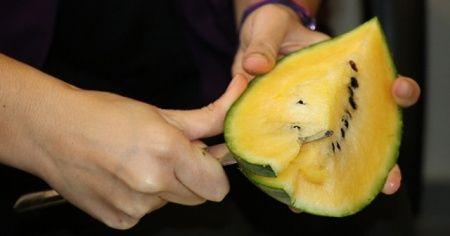 Tayland'dan gelen tohumla sarı karpuz yetiştirdi