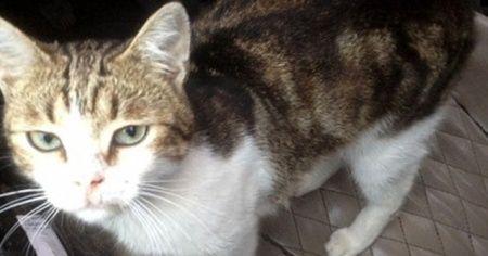 Uyuşturucu taşıyan kedi ortadan kayboldu