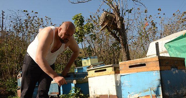 'Arılar beni tanır' dedi, yarı çıplak peteklerin arısına daldı