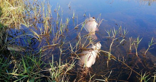 Çanakkale'de esrarengiz balık ölümleri