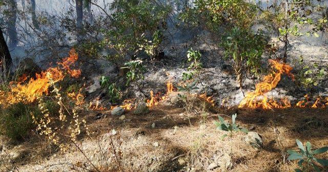 Erzin'de orman yangını