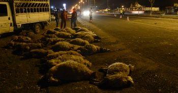 Otomobil sürüye çarptı: Onlarca koyun telef oldu