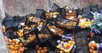 Rusya'ya gönderilen mandalinalar yanlış etiket kurbanı oldu