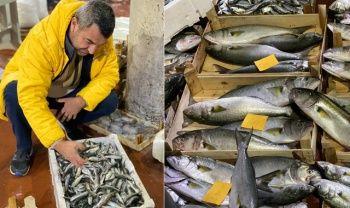 Son yılların en kötü balık sezonu yaşanıyor