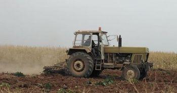 Tel Abyad'da buğday hasadı başladı