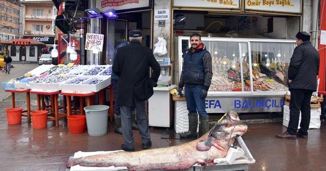 Dev yayın balığı görenleri şaşırttı! Kilosu 50 liradan satıldı