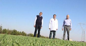 Ahmet Buğdayı Anadolu topraklarında yeniden hayat bulacak
