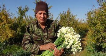 Bu çiçek üreticisinin yüzünü kışları güldürüyor