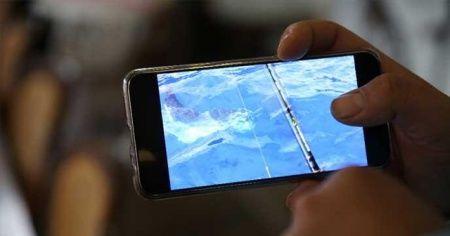 Antalya'da görülen 'ay balığı' şaşırttı