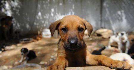 Antalya'da hayvan bakımevindeki köpeklerin öldürüldüğü iddia edildi