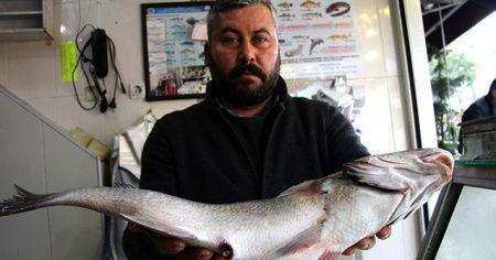 """Batı Karadeniz'deki """"levrek kıtlığında"""" 3 balık, bin 600 liraya alıcı buldu"""