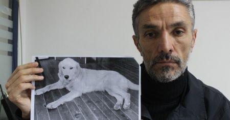 Dedektif gibi iz sürüp kaybolan köpeğini Amerika'da buldu