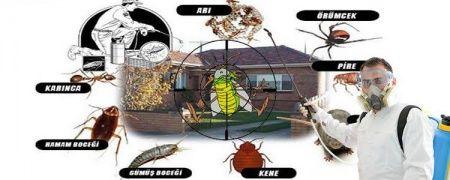 Evde Böcek Neden Olur? / Evde Böcek Olmaması İçin Neler Yapılmalı?