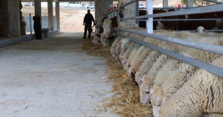 İstanbul'daki işini bırakıp hayvancılık için tesis kurdu, elektrik alamayınca mağdur oldu