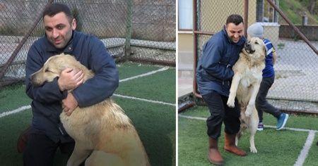 Sokak köpeğini sopayla kovalayan şahıs köpekten özür diledi