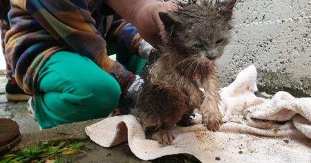 Yağmur suyu kanalına sıkışan yavru kedi için seferber oldular