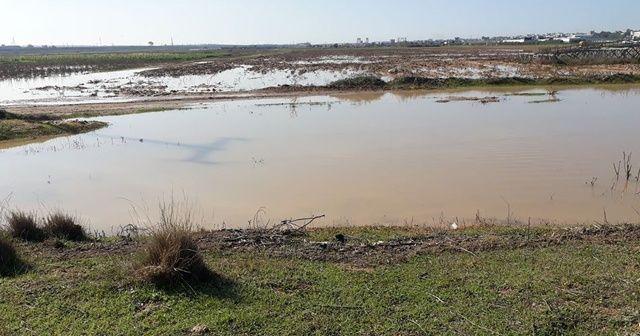 İsrail baraj kapaklarını açtı: Gazzeli çiftçiler perişan oldu